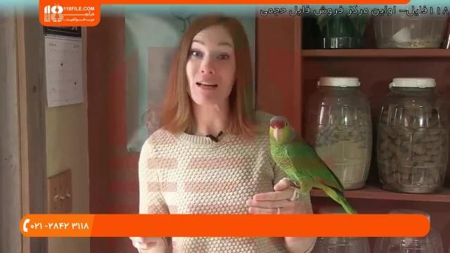 آموزش تربیت طوطی - پنج نشانه از بیماری پرنده