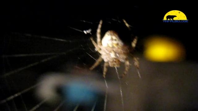 عنکبوت های عجیب با صورت غیرعادی !