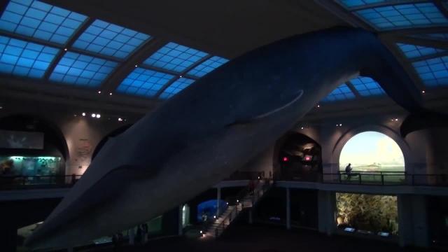گشتی در موزه تاریخ طبیعی نیویورک