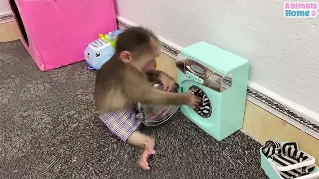 بچه میمون بامزه و دوست داشتنی