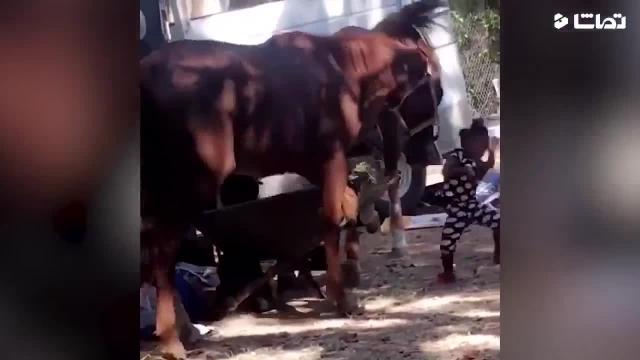 کلیپ بامزه و دیدنی درگیری خنده دار حیوانات !