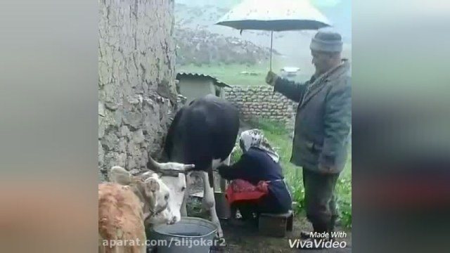 کلیپ موسیقی سنتی شجریان