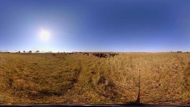 کلیپ دیدنی از حیات وحش آفریقا !