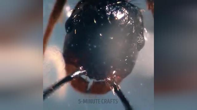 38 تصویر زیبا که فقط زیر میکروسکوپ میتونید تماشا کنید !
