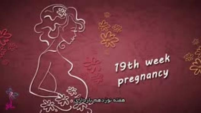 در هفته 19 بارداری کودک به چه اندازه رشد کرده است ؟؟؟؟